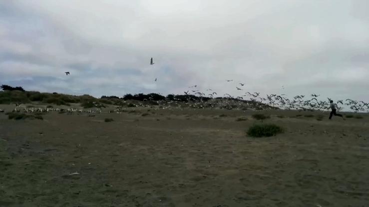the-birdscapture